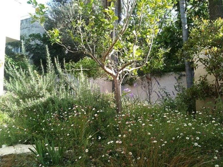 וילות בהרצליה פיתוח Villa L'Etoile - וילות למסיבות במרכז ווילה באזור המרכז